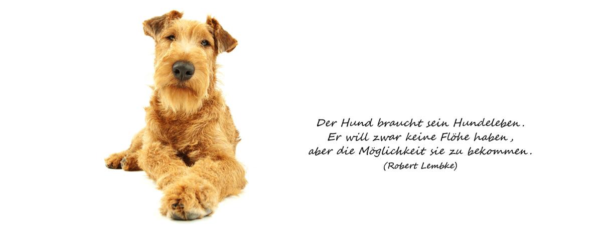 Tierarzt Fürth, Dr. Kudlorz